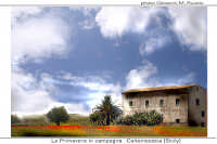 primavera in campagna  - Caltanissetta (4036 clic)