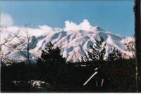Il cratere visto dalla pineta Ragabo  - Etna (2871 clic)