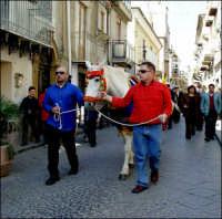 Festa di S.Giuseppe 19 marzo 2004 Salita dei Cavalli che portano in dono il Grano come simbolo di prosperità Valguarnera  - Valguarnera caropepe (13537 clic)