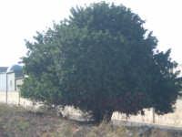 Pantano di Morghella Cozzo santa Lucia Carrubo  - Pachino (2149 clic)