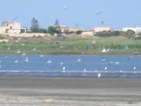 Pantano di Morghella uccelli gabbie allevamento marino  - Pachino (2538 clic)