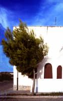 Albero modellato dal vento TERRASINI leo lima