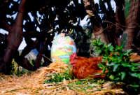 Uovo di gallina siciliana  - Palermo (12008 clic)