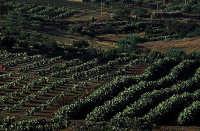 FICHIDINDIA  - Caltagirone (2921 clic)