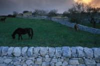CAMPAGNA RAGUSANA  - Ragusa (4304 clic)