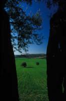 CAMPAGNA RAGUSANA  - Ragusa (2217 clic)