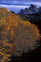 ERUZIONE 2001  - Etna (3875 clic)