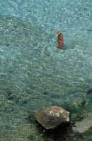 UNA VEDUTA DI BAIA DEI CONIGLI  - Lampedusa (34382 clic)