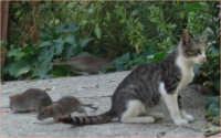 quando il gatto non vede...  - Messina (3266 clic)