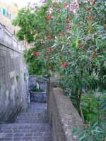 scale attorno a Montalto  - Messina (3189 clic)