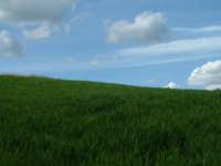 Campo di grano ad Enna. Altro che lo sfondo di Windows XP :)  - Enna (3930 clic)