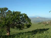 Panorama dalla campagna di Calascibetta(EN). Veduta del lago Nicoletti e,sullo sfondo, l'Etna  - Enna (3974 clic)