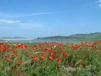 Raddusa(EN). Primavera sulle sponde del lago Ogliastro. ENNA Innuendo Innuendo