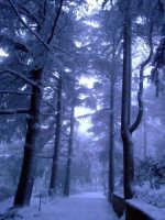 Enna. Neve alla Villa Torre di Federico  - Enna (3790 clic)