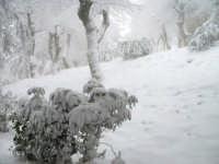 Enna. Neve alla Villa Torre di Federico II. ENNA Innuendo Innuendo