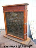 Le api  - Sortino (1656 clic)