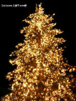 Albero di Natale in Piazza Duomo ad Ortigia, Natale 2003  - Siracusa (3198 clic)