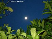La luna attraverso i limoni  - Cava d'aliga (3714 clic)