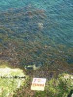 Vendesi scogliera fronte mare  - Siracusa (2955 clic)