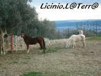 Due cavalli, sullo sfondo il panorama di Canicattini Bagni  - Canicattini bagni (3336 clic)