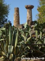 La Valle dei Templi di Agrigento (1408 clic)