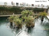 Ortigia culla del Mediterraneo Scorcio della Fontana Aretusa  - Siracusa (2210 clic)