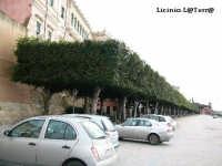 Gli alberi della Marina ad Ortigia  - Siracusa (2305 clic)