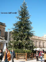 Piazza Duomo in Ortigia, albero di Natale 2004  - Siracusa (2529 clic)