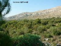 Monti Iblei  - Sortino (4442 clic)