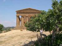 Valle dei Templi  - Agrigento (2272 clic)