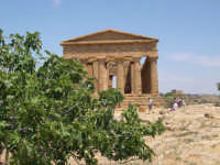 Valle dei Templi  - Agrigento (2374 clic)
