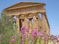 Valle dei Templi  - Agrigento (2720 clic)
