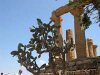 Valle dei Templi  - Agrigento (2327 clic)