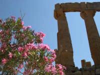 Natura lungo la Valle dei Templi  - Agrigento (3980 clic)