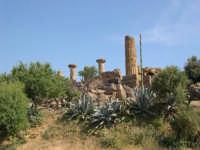 Valle dei Templi  - Agrigento (2582 clic)