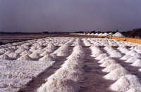 Dune di sale  - Marsala (3896 clic)