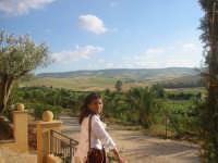 Colline siciliane...  - Menfi (12390 clic)