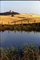 Castello di poggio Diana   - Ribera (4456 clic)