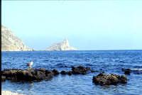 isola di Marettimo, punta Troia   - Egadi (3521 clic)