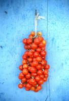 isola di Salina, pomodorino a grappolo   - Eolie (6145 clic)