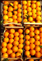 arance rosse   - Ribera (7249 clic)