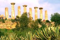 tempio di Ercole, colonne   - Agrigento (4468 clic)