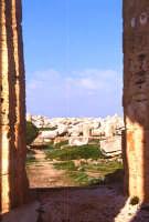 tempio greco e rovine   - Selinunte (2882 clic)