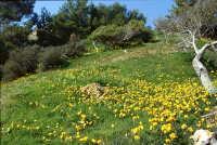 Torre Salsa fioritura di    - Realmonte (2303 clic)