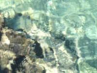 Il fondale che si intravede attraverso l'acqua cristallina di Siracusa.  - Arenella (9942 clic)