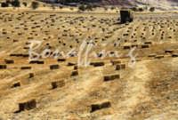 Sicilia 1980/82 civiltý contadina: Nostalgia? MAZZARINO GAETANO BONAFFINI