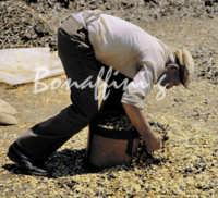 Sicilia 1980/82 civilta' contadina: Nostalgia?  - Mazzarino (3355 clic)