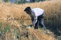Sicilia 1980/82 civilta' contadina: Nostalgia?  - Mazzarino (2910 clic)
