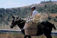 Sicilia 1980/82 civilta' contadina: Nostalgia?  - Mazzarino (3574 clic)