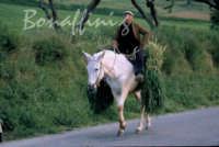Sicilia 1980/82 civilta' contadina: Nostalgia?  - Mazzarino (3354 clic)